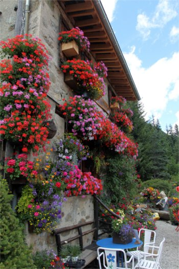 Floral display, Chamonix