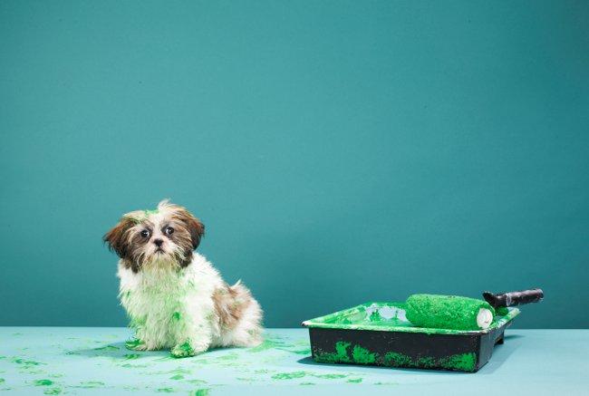 DIY dangers for pets