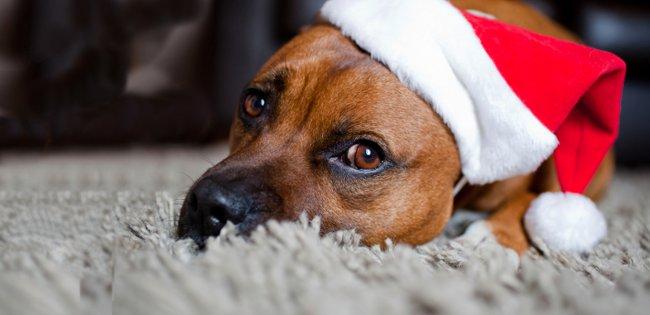Your dog at Christmas