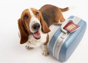 pet health on holiday