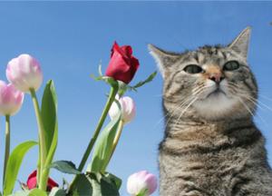 pet health in the garden