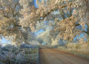 Cotswold Hoar frost