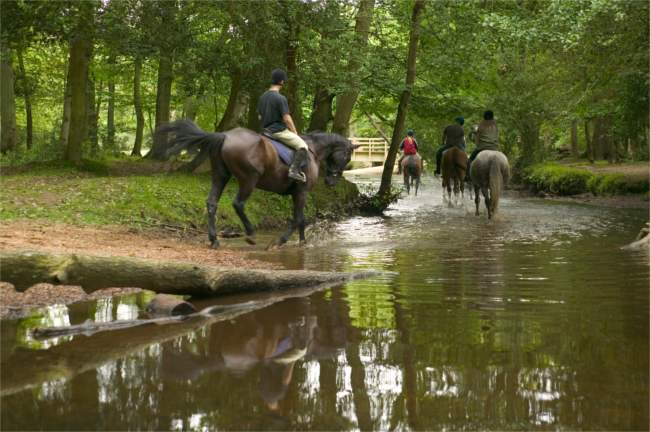 New Forest pony trekking