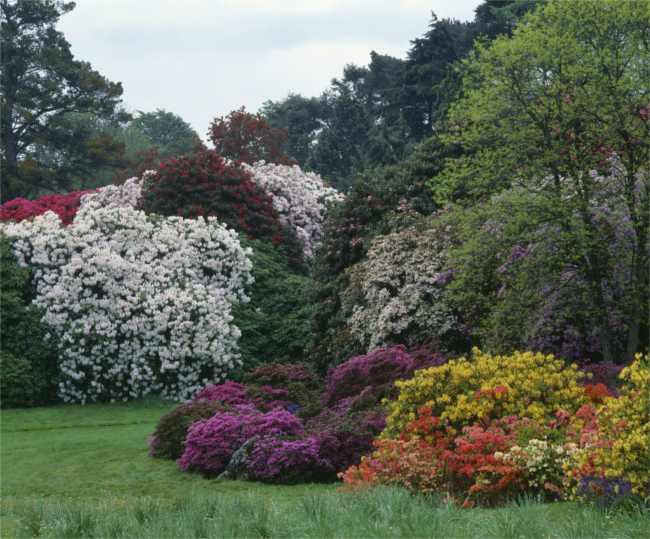 Rowallene Gardens - County Down
