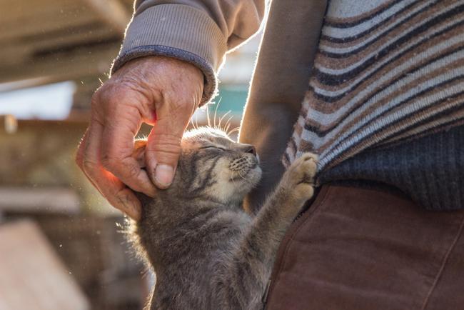 Man stroking kitten
