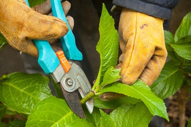 Prune shrubs - September gardening tips