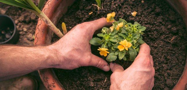 potting propagated plants