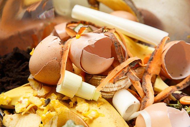 Eggs shells for organic composting