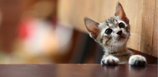 create a cat safe home