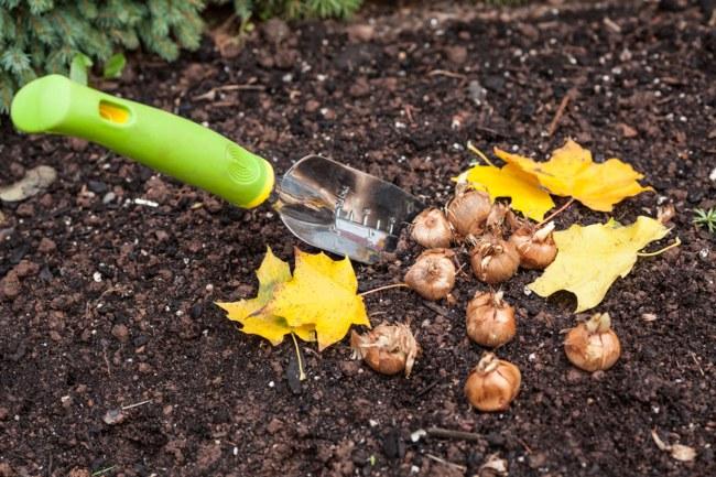 September's gardening tips