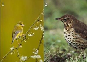 RSPB bird quiz