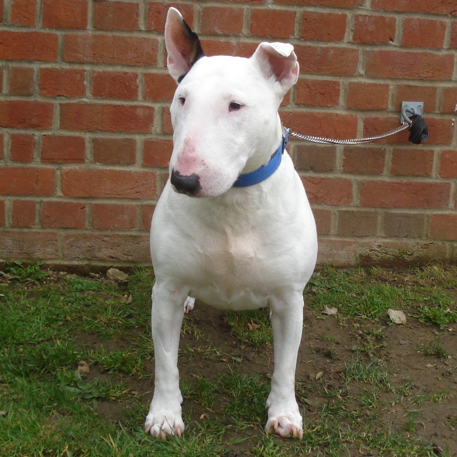 Dogs For Rehoming Uk