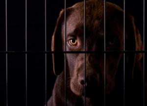 Adopting a rescue pet