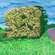 The Big Hawthorn