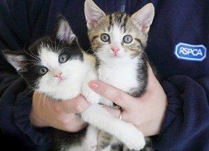 Kittens for rehoming
