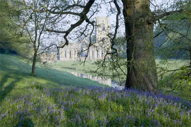 Fountains Abbey - NTPL Andrew Butler