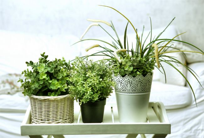 House plants on a tray