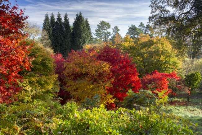 Walk through a landscape of colour this autumn