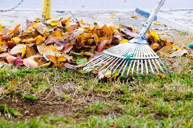 Autumn essentials for your garden