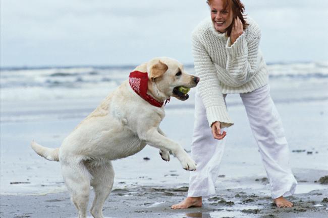 Women with dog on beach