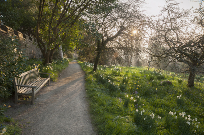 Wander among the daffodils this March
