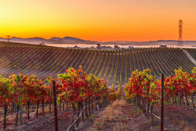 Wine tours that deserve your attention