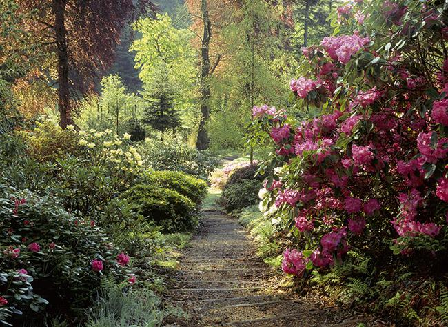 Colby Woodland Garden, Pembrokeshire