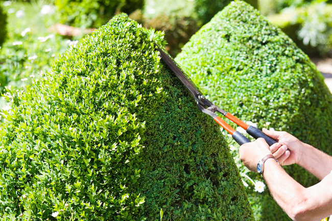 Pruning a bush