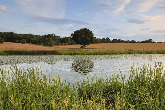 Ickworth, Suffolk