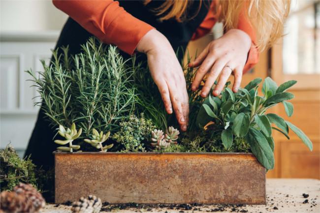 Grow your own evergreen centerpiece