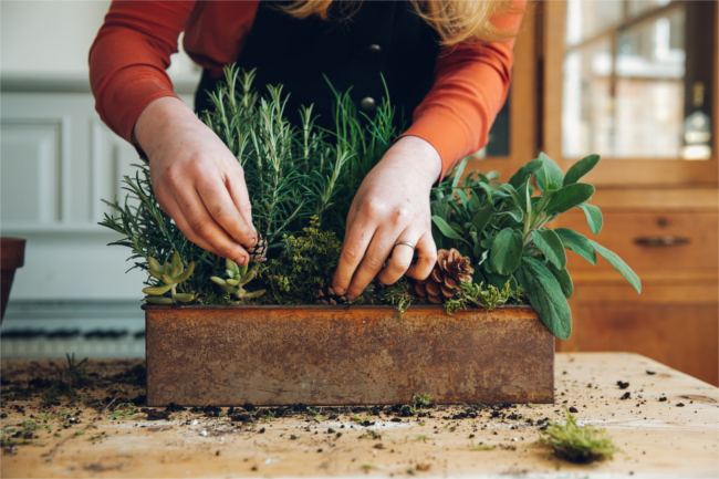 Evergreen herb planter