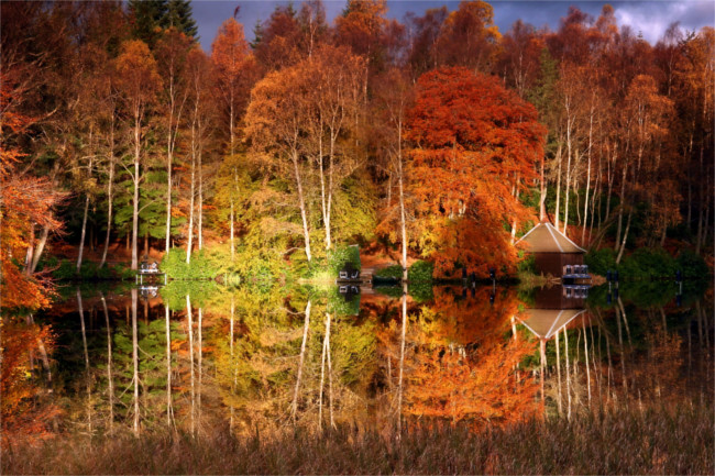 Faskally Wood