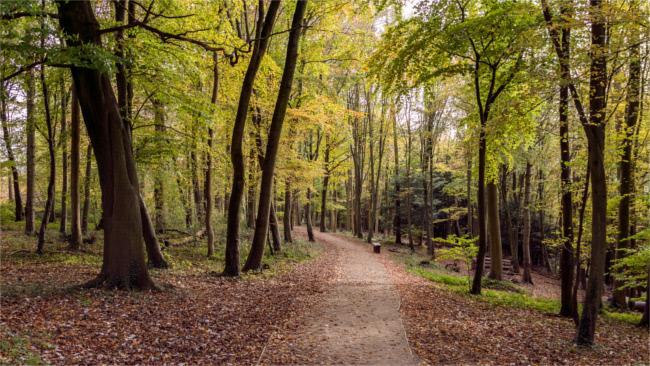 Hughenden, Buckinghamshire