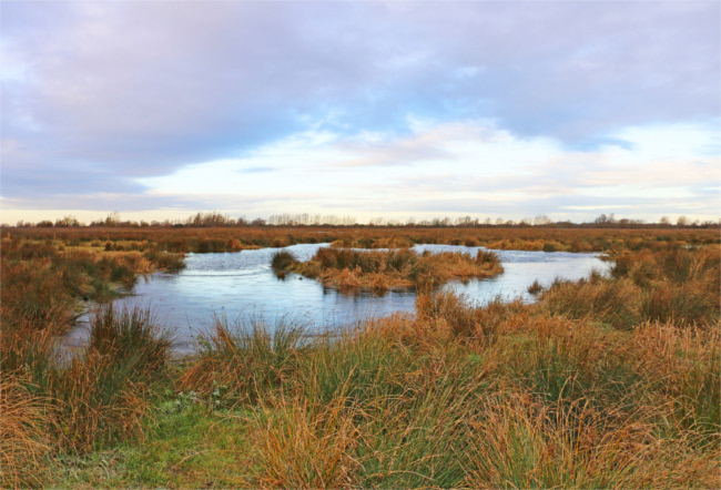 Wicken Fen Nature Reserve, Cambridgeshire
