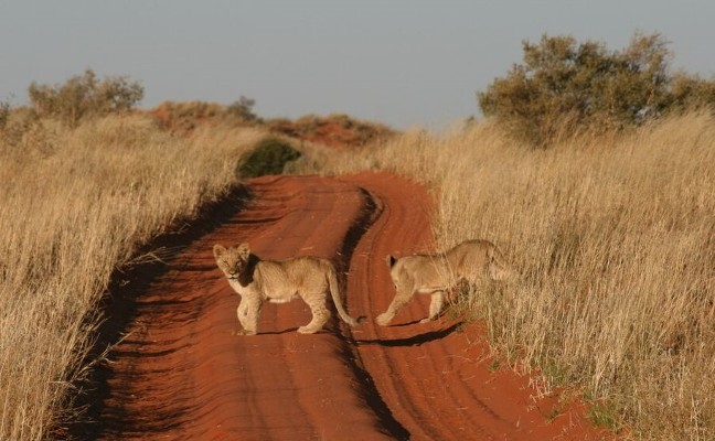 South Africa's Northern Cape