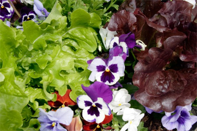 lettuce and flowers container