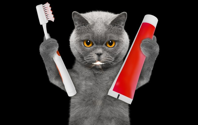 Practical dental tips for cats