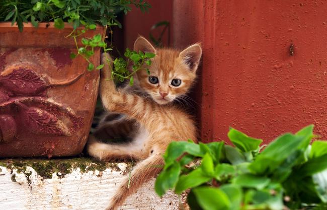 cat-friendly garden tips
