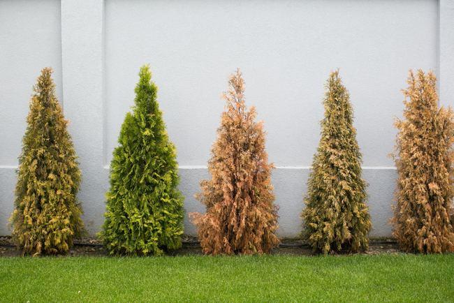 dry shrubs
