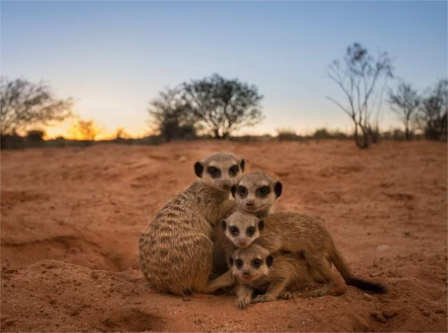 The Meerkat OAP
