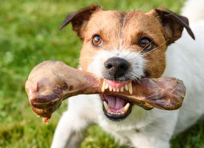 basic dog aggression