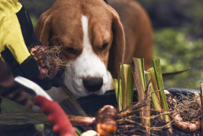 pets spring garden