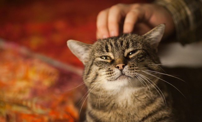 tips to stop cat scratching around the home