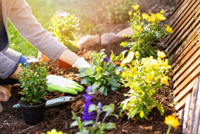 planting flower bed