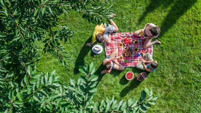 picnic - vegetarian sandwiches