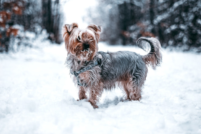 winter wellness for pets