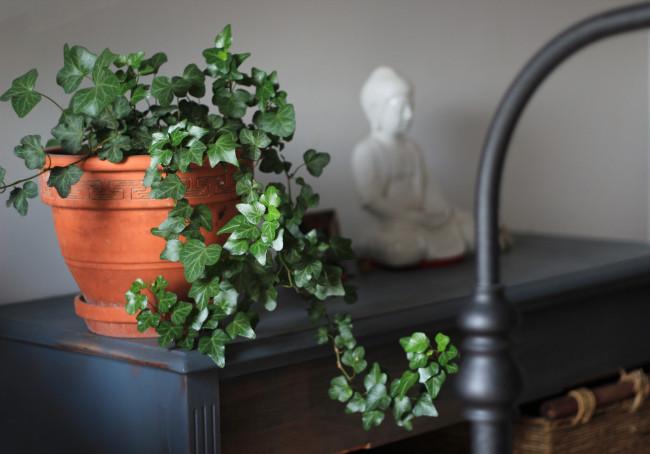 resilient indoor ivy