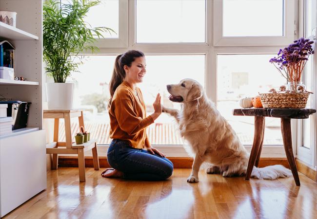Dog Behaviour and Training